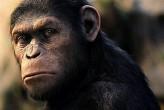 Dawn_planet_apes